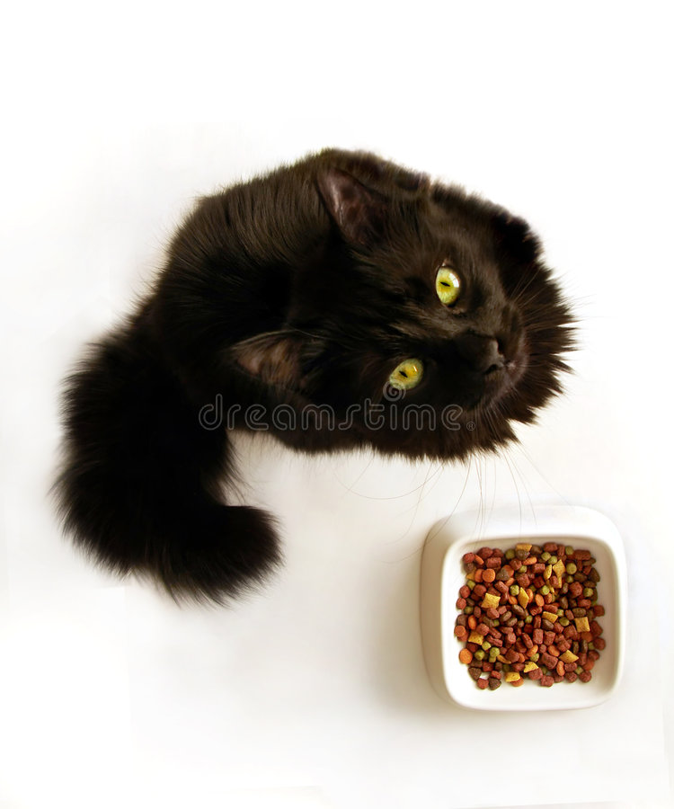Picky cat and food bowl. Studio shot of a black picky cat looking up refusing to eat from the bowl with dry food (isolated on white royalty free stock photos