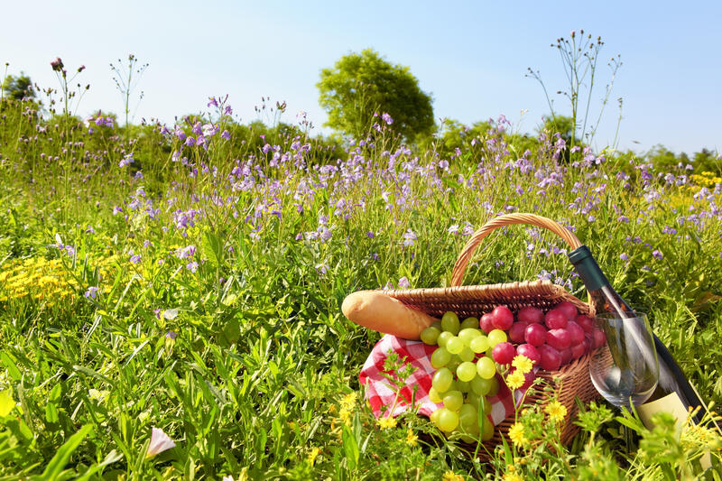 Download Picnic stock image. Image of lifestyle, harvest, nobody - 24904631
