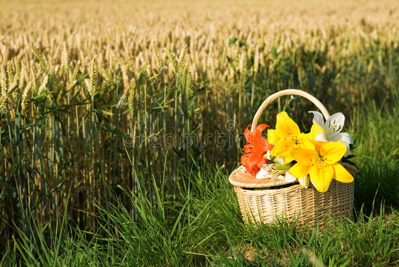 Download Picnic Basket With Bunch Of Flowers Royalty Free Stock Image - Image: 15085286