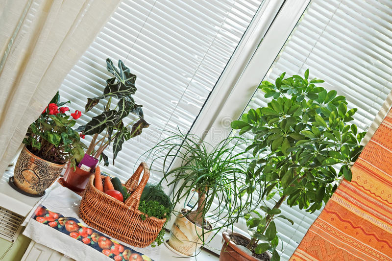 Download Picnic Basket And Flowerpots On Window Stock Photo - Image: 12376566