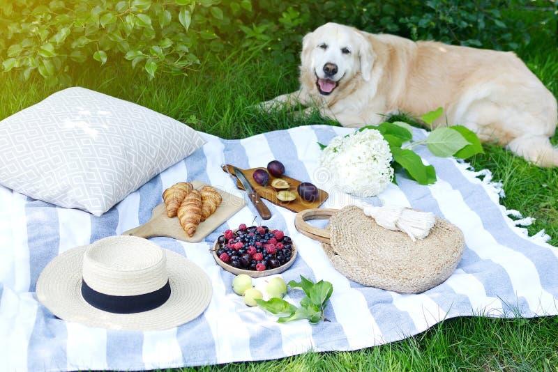 Picnic con le bacche del forno della frutta dell'alimento di stile di Instagram della famiglia di Labrador di golden retriever de fotografia stock libera da diritti