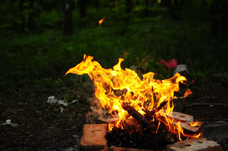 Picnic fire in the forest. In the night stock photography