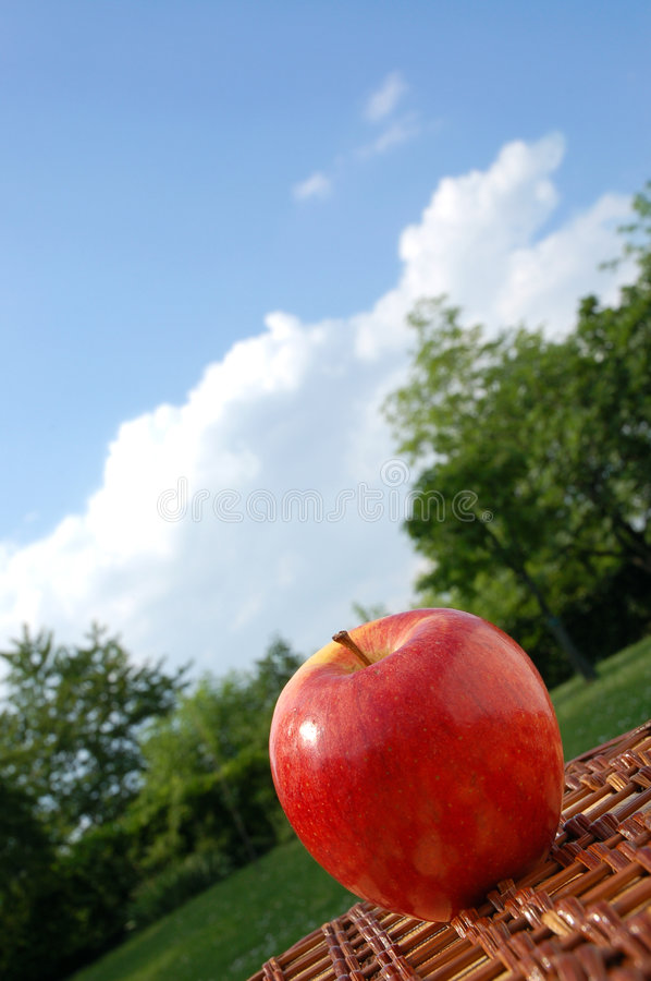 Download Picnic in the park stock photo. Image of healthy, summer - 2419106