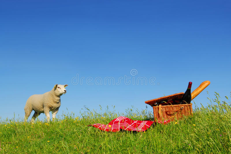 Download Picnic sheep stock photo. Image of bread, outdoors, meadow - 10130154