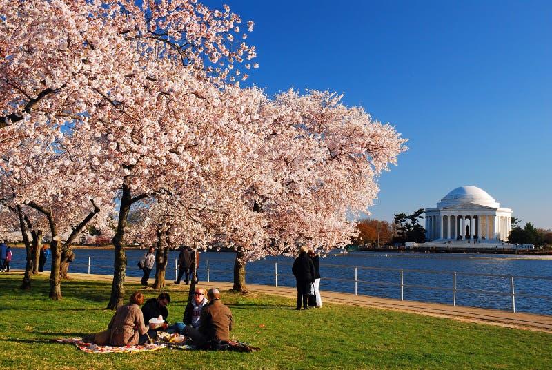 Picnic sotto i fiori di ciliegia fotografia stock libera da diritti