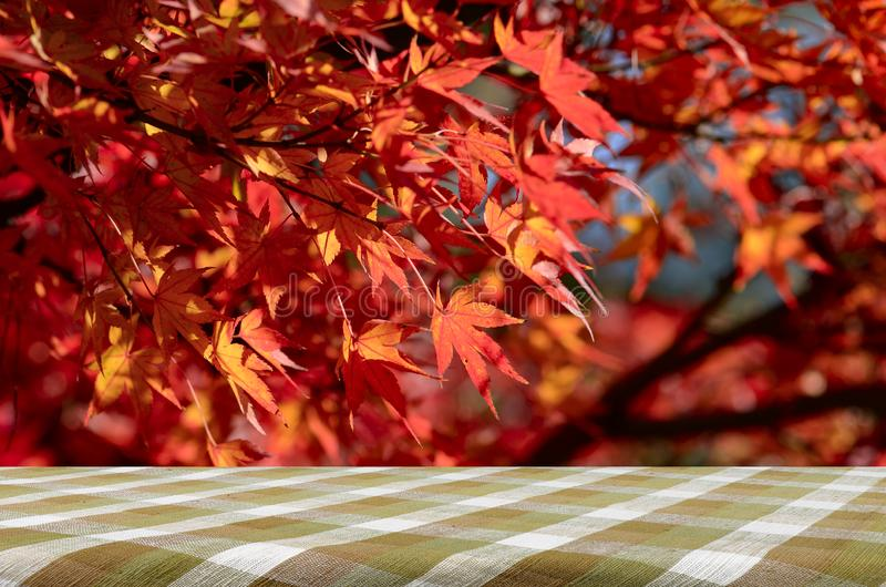 Picnic table with red maple background. stock image