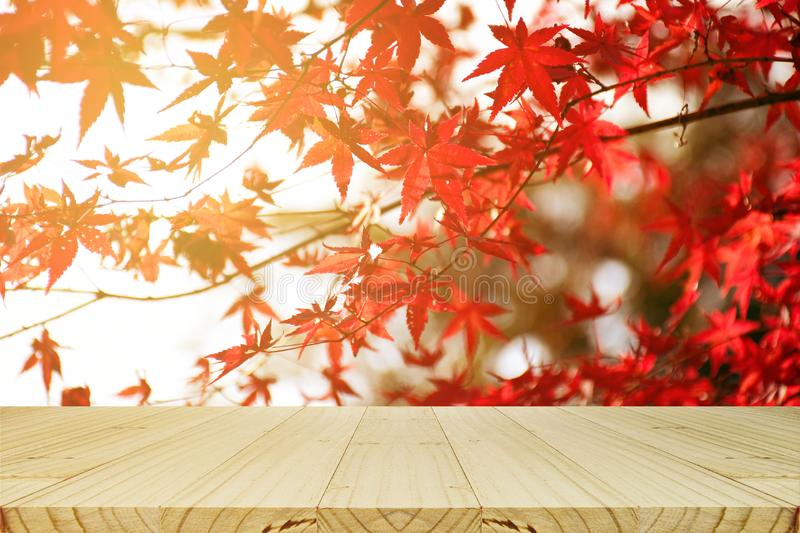 Picnic table with Japanese maple tree garden in autumn stock photos