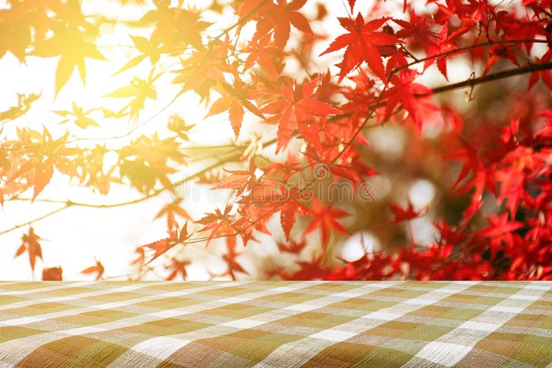Picnic table with Japanese maple tree garden in autumn stock photo