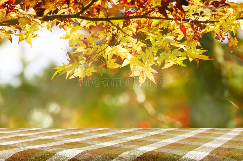 Picnic table with Japanese maple tree garden in autumn. royalty free stock images