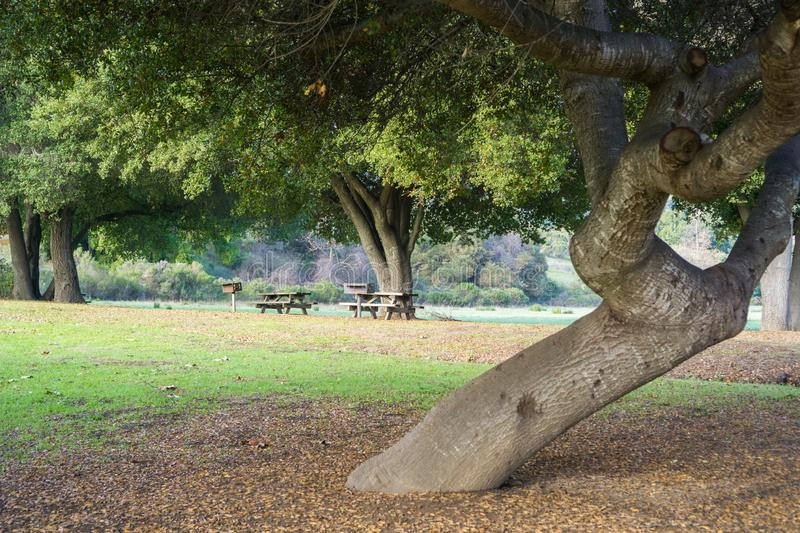 Picnic tables located under old live oak trees, Rancho San Antonio County Park, south San Francisco bay, Cupertino, California stock images