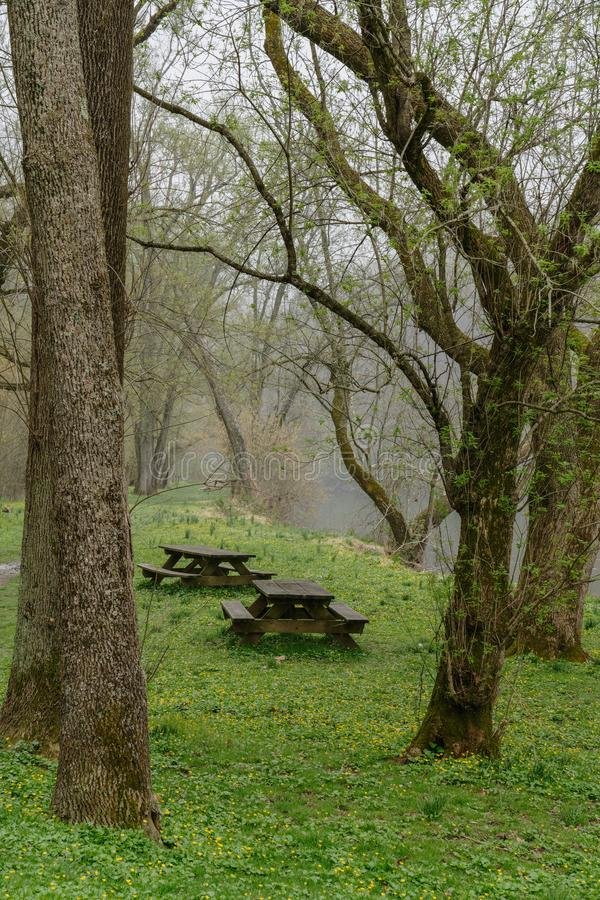 Picnic tables in the rain on an early spring day. With the trees just starting to bud in bright green and there are tiny yellow flowers in the new grass stock images