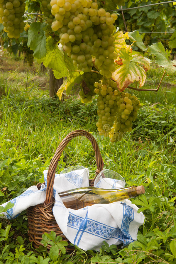 Picnic in a vineyard stock photo