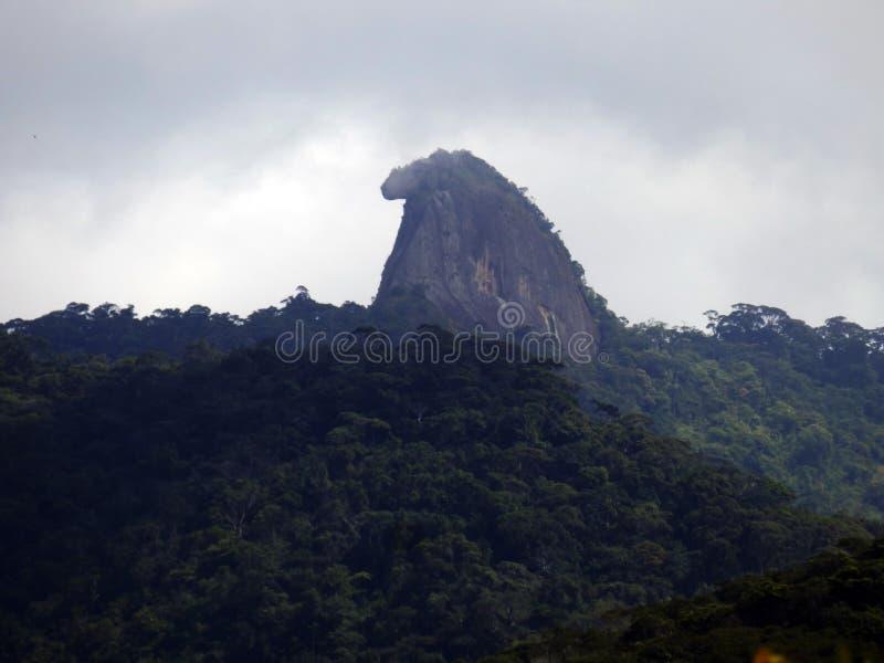 Pico делает papagaio в пляже Ilha большом в положении Рио-де-Жанейро стоковые изображения rf
