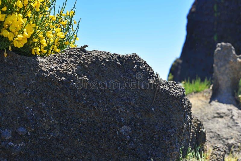 Pico делает горы Arieiro стоковые фотографии rf