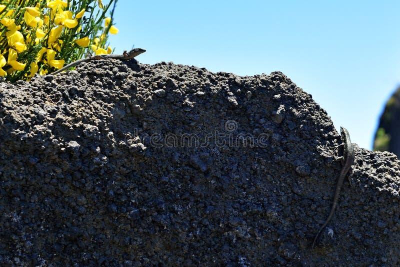 Pico делает горы Arieiro стоковая фотография