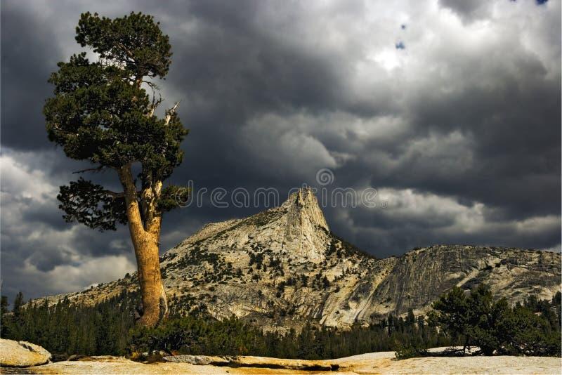 Pico da árvore e da catedral imagem de stock royalty free
