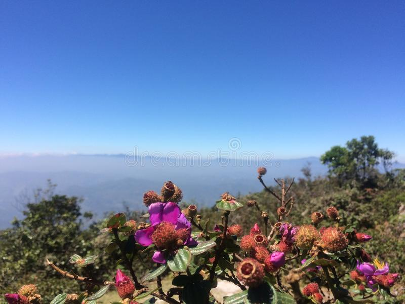 Pico de montanha com flores imagem de stock