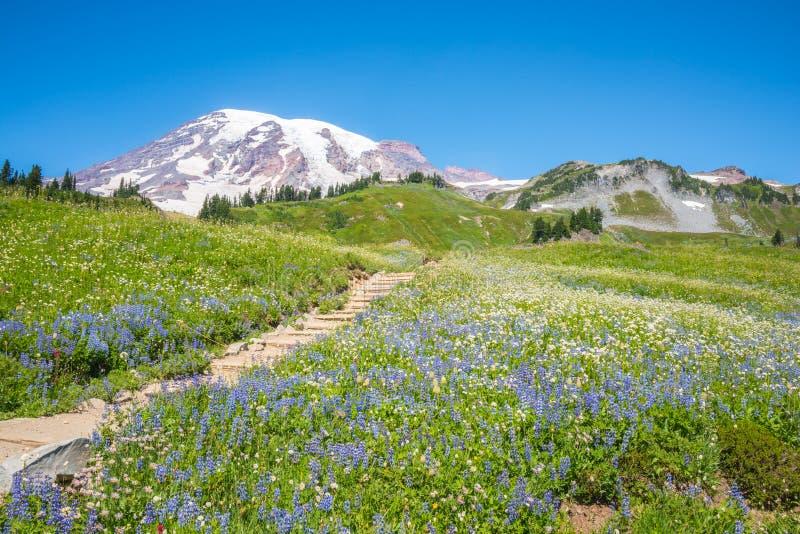 Pico de montanha nevado e campo dos Wildflowers fotografia de stock