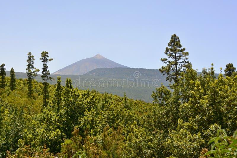 Pico de Teide, Tenerife, κανάρια νησιά, Ισπανία, Ευρώπη στοκ εικόνες με δικαίωμα ελεύθερης χρήσης