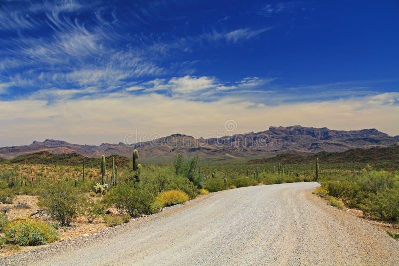 Pico de Tillotson en el monumento nacional del cactus del tubo de órgano foto de archivo
