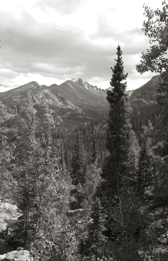 Pico longo no parque da montanha rochosa imagem de stock