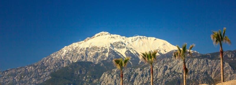 pico Neve-tampado das montanhas e das palmeiras contra o céu azul bandeira foto de stock royalty free
