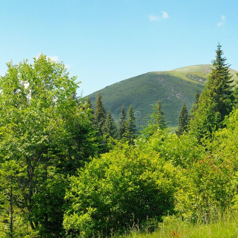 Download Picos De Montaña Contra El Cielo Azul Imagen de archivo - Imagen de abeto, panorama: 42434509
