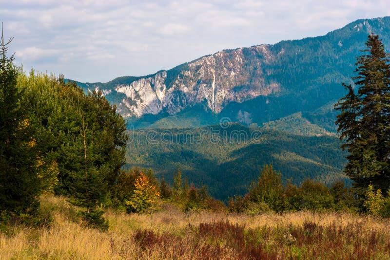 Picos de montaña y abetos que cogen rayos de sol calientes Prado agradable en el primero plano fotografía de archivo libre de regalías