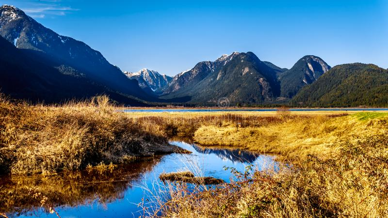Picos nevados de las montañas de la costa que rodean Pitt River y a Pitt Lake en Fraser Valley de la Columbia Británica Canadá imagenes de archivo