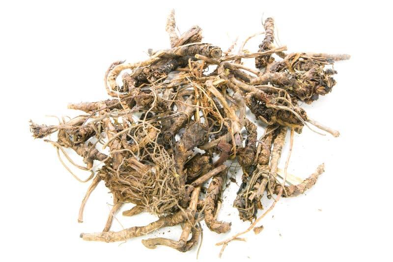Picrorrhiza kurroa Benth arkivfoton