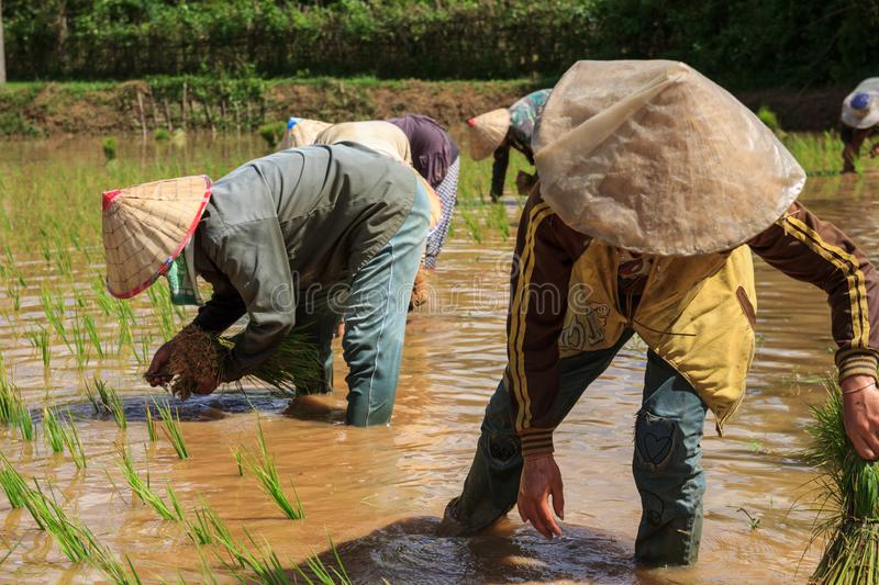 Villagers in Laos working in the fields stock images