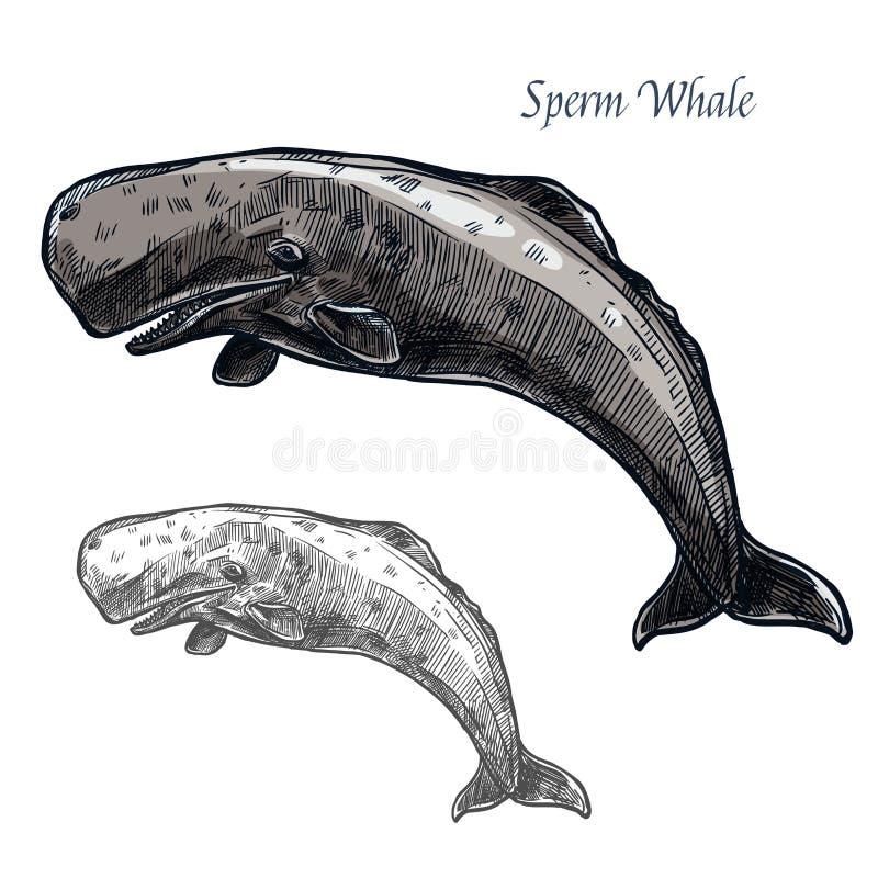 Pictogram van de potvis het vector geïsoleerde schets vector illustratie