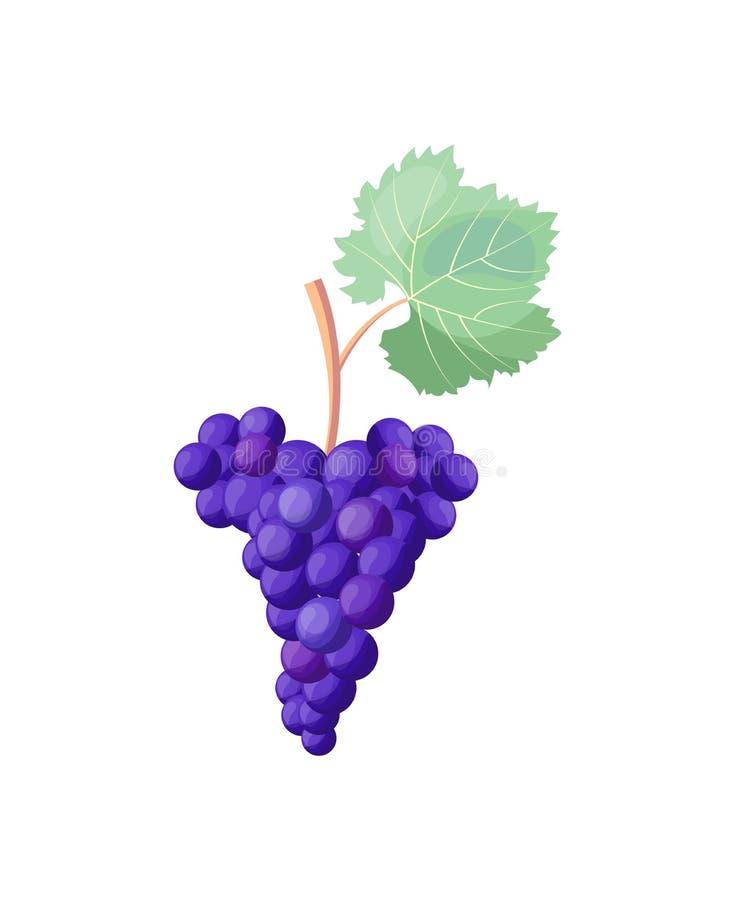 Pictogram van Rode Rijpe Druiven op Vectorillustratie stock illustratie