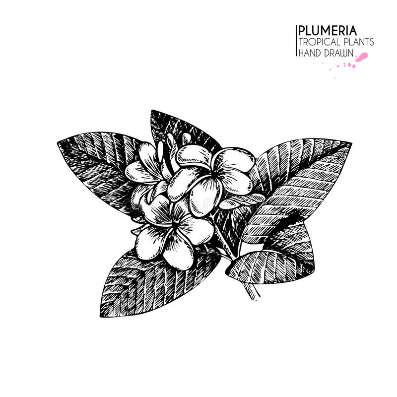 Pictogrammen van de Vecotr de hand getrokken tropische installatie Exotische gegraveerde bladeren en bloemen Isoalated op wit Fra vector illustratie