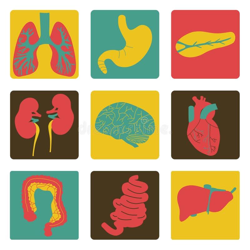 Pictogrammen van interne organen royalty-vrije stock fotografie