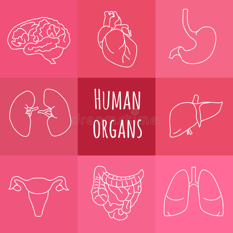 Pictogrammen van menselijke organen stock illustratie