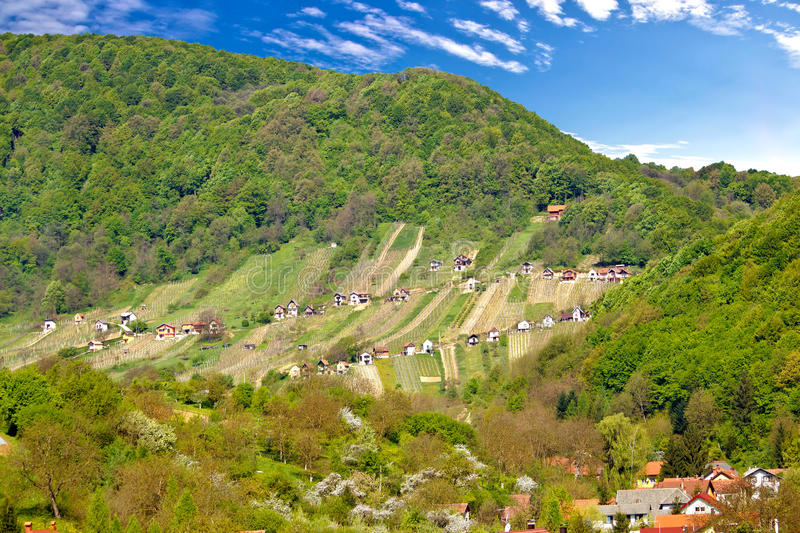 Pictoresque vineyard hill in Zagorje. Green region of Croatia royalty free stock images