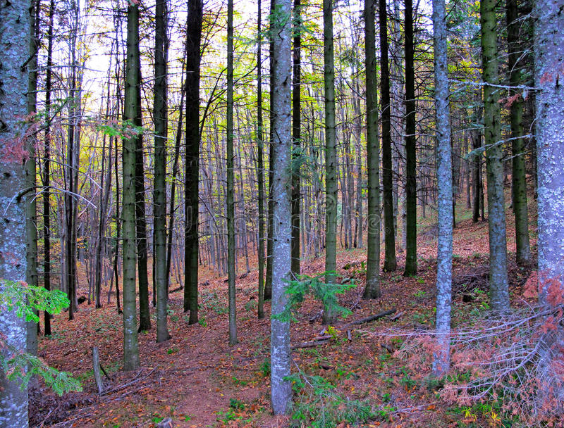 Pictural autumn mountain forest stock photo