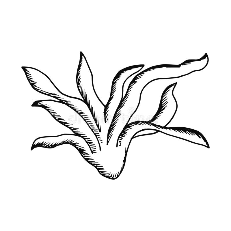 Picture agave plant. leaves with juice royalty free illustration