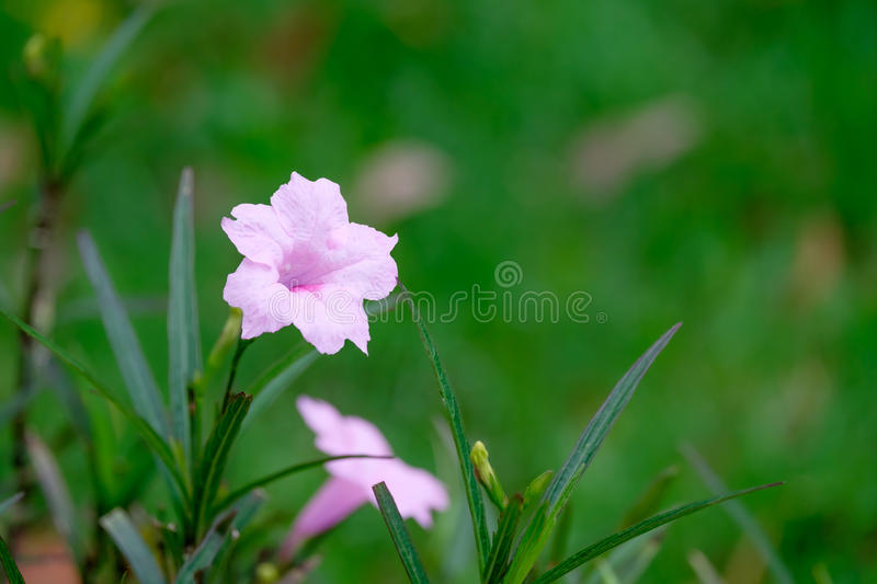 Beautiful wild pink flower with green background royalty free stock image
