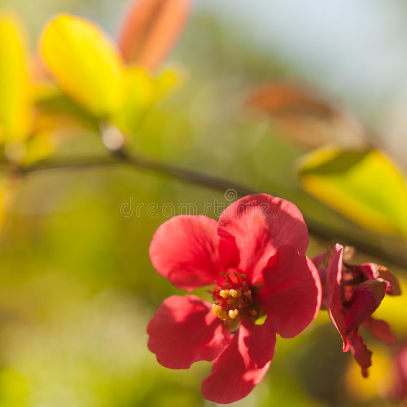 Blurry blossom. Picture of a blurry blossom royalty free stock images