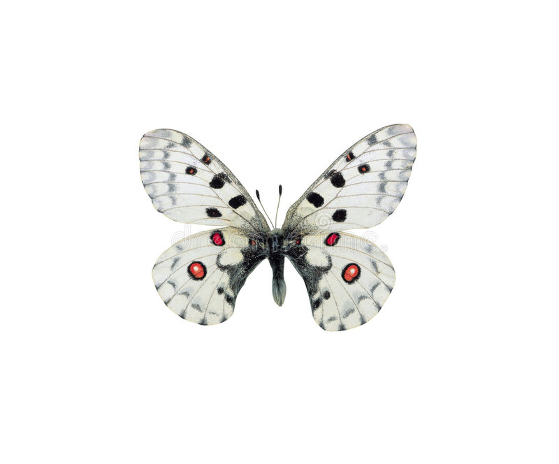 Picture of Butterfly stock photos