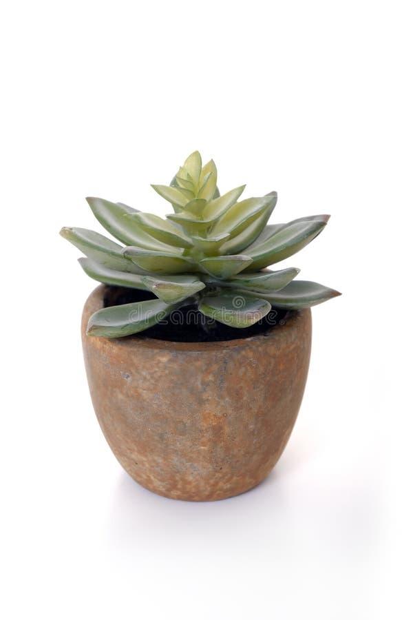 Decoration cactus royalty free stock image