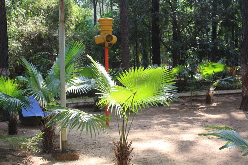 Coconut Tree in Park. Picture of Coconut tree in lamani park with sun light on its leaves stock photography