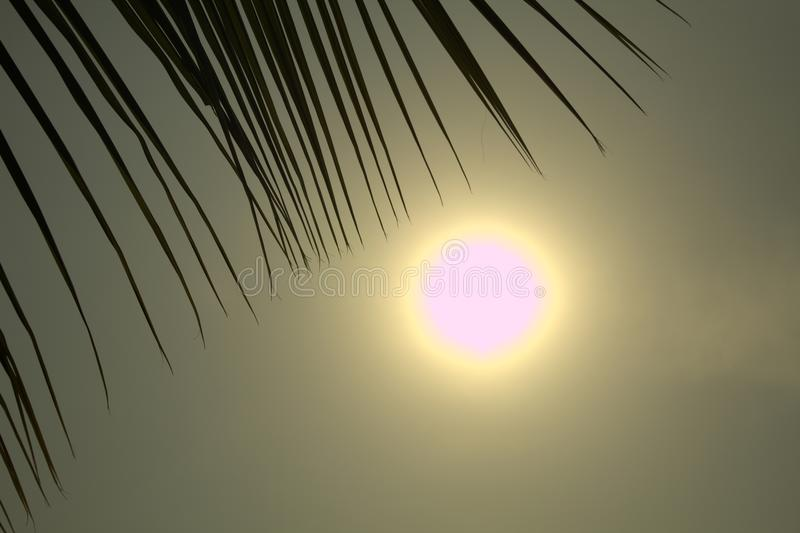 Sun Rise Light with Coconut leaves. Picture of Coconut tree leaves through which sun light is crossing and feels like beach morning royalty free stock photos