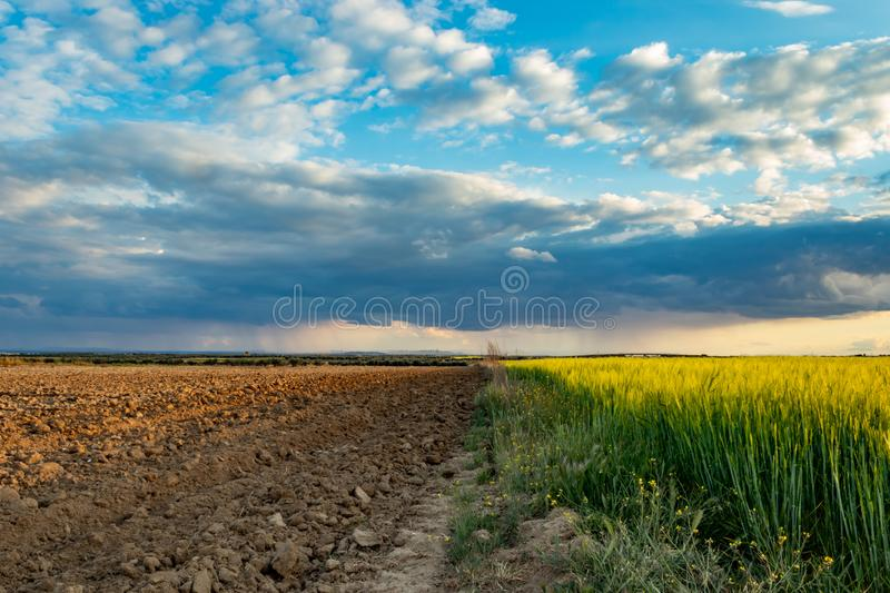 Rotational Agriculture and wheat fields royalty free stock image