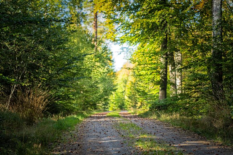 Picture of country side road in the green summer forest royalty free stock photography