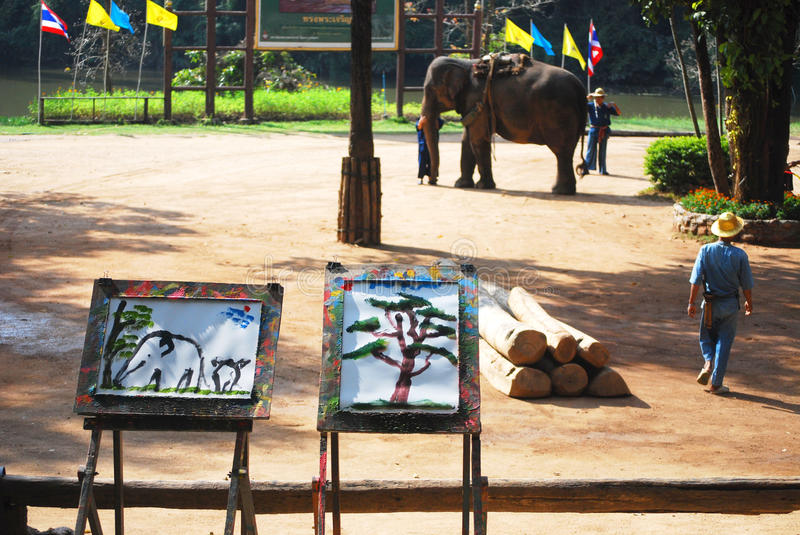 Picture draw by Elephants. At thai elephant conservation centre, lampang, thailand royalty free stock images