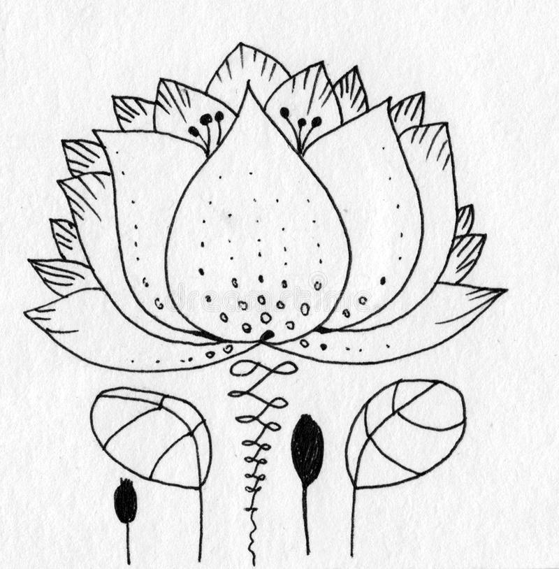 Lotus with leaves lines minimal stock images