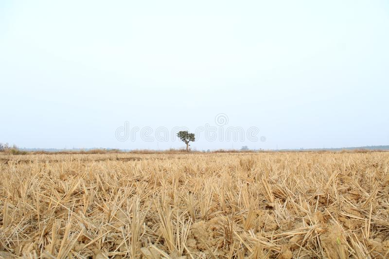 Half Earth ,Half Sky. Picture of Earth and Sky with half and almost same in size captured in day time from ground level royalty free stock photos